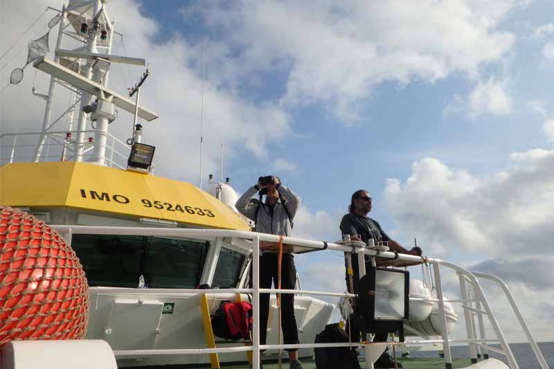 campana Bioman avistamiento aves y cetaceos