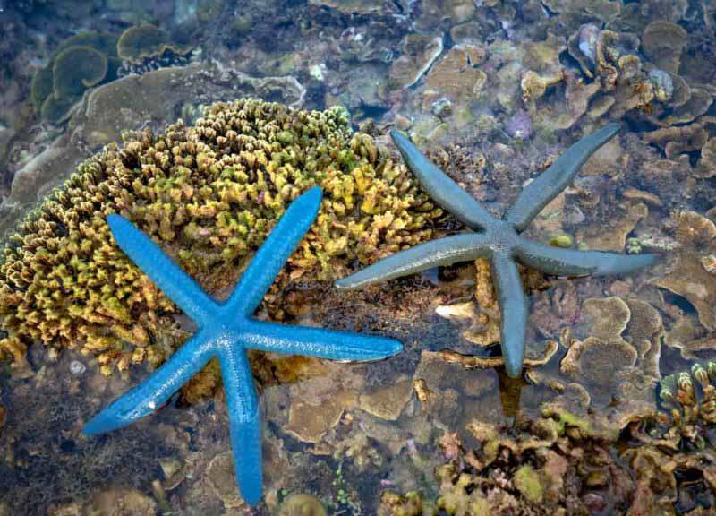 estrellas de mar conservacon de ecosistemas marinos