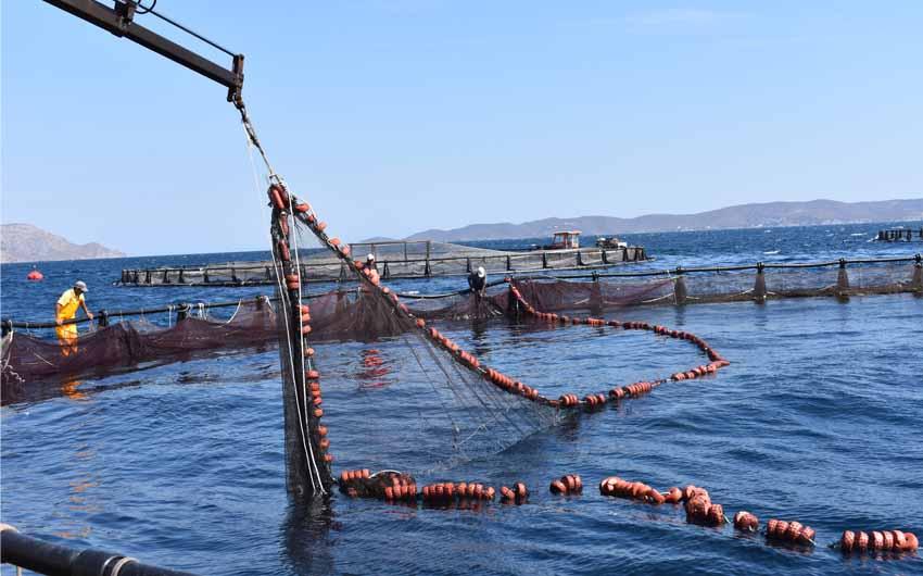 FISHEALTH proyecto más ambicioso de I+D+i de la acuicultura española